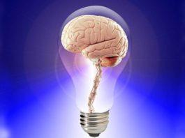 Brain-Learn