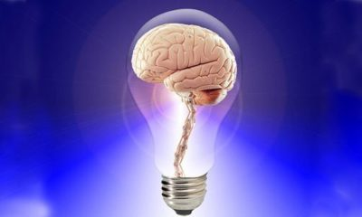 How Does The Human Brain Learn | Understanding Human Intelligence