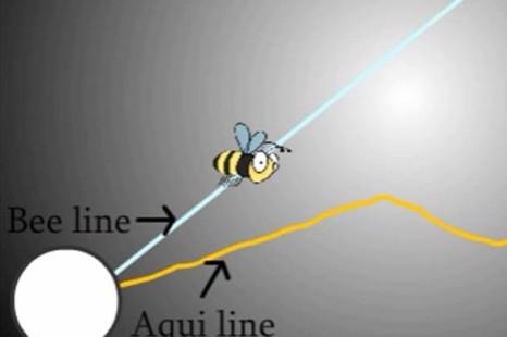 Beeline & Aquiline
