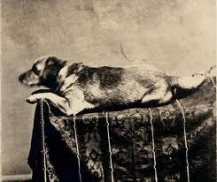 Lincoln's Dog