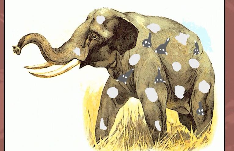 Mnemonic Video Dictionary / Pachyderm Meaning