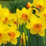 Interesting Flowers Facts Featured