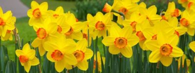 10 Most Interesting Flowers And Their Interesting Facts