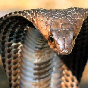10 Deadliest Creatures In The World