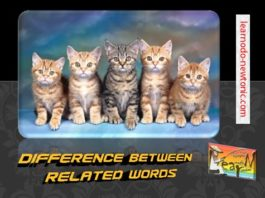 difference bettween similar words