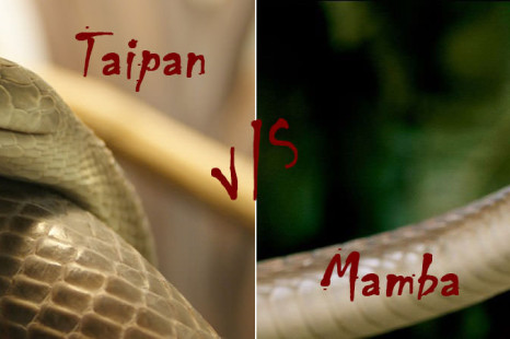 Inland Taipan Vs Black Mamba | The World's Deadliest Snake