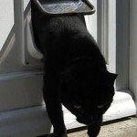 Cat Flap or Cat Door
