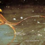 Jesus Christ Lizard On Water