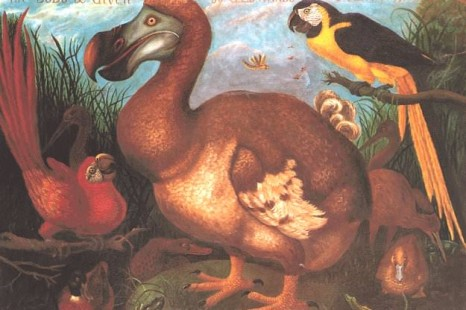 Dead as a Dodo: Origin of the Expression