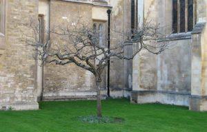 Newton's Apple Tree