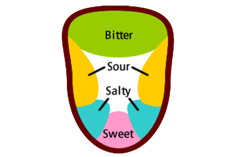 The Tongue Map Myth