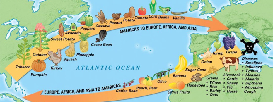 Foods And Animals From The New World The Columbian Exchange