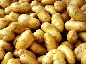 Potato - A New World crop