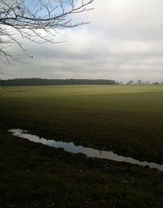 Site of Battle of North Walsham