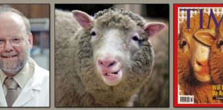 Dolly The Sheep Facts Featured