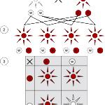 Dominant and recessive phenotypes