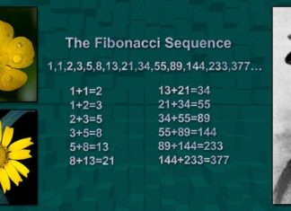Fibonacci Facts Featured