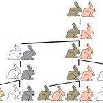 Fibonacci Sequence Rabbit Problem