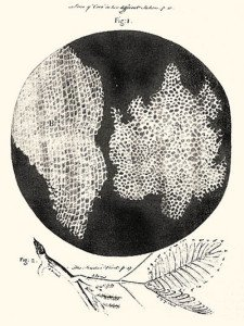 Cell structure of Cork by Hooke