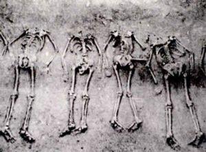 Sacrificed humans at Anyang