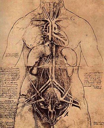 Leonardo Da Vinci's drawing of principal organs