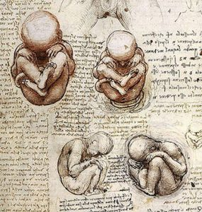 Leonardo's drawings of a Foetus in the Womb
