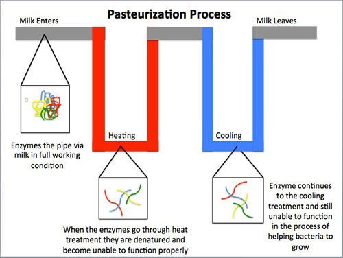 Pasteurization process diagram