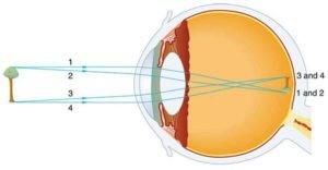 Human eye image formation diagram