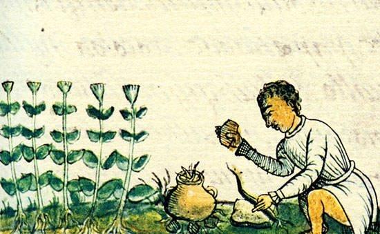Aztec medicine painting