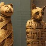 Egyptian mummies of animals