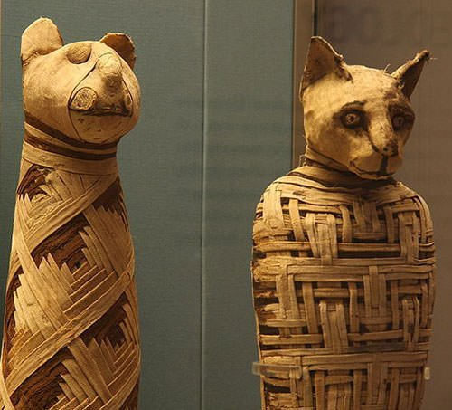 Egyptian mummies of animals