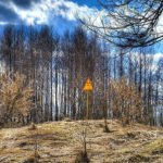 Chernobyl Disaster Red Forest
