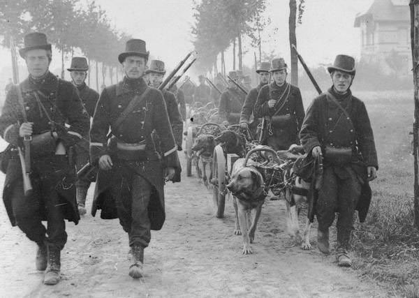 Belgian troops in the Battle of the Frontiers