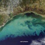 Dead Zone Gulf of Mexico