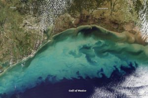 Dead Zone Gulf of Mexico