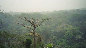 Congo Rainforest